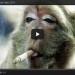 monkeyvideo2014